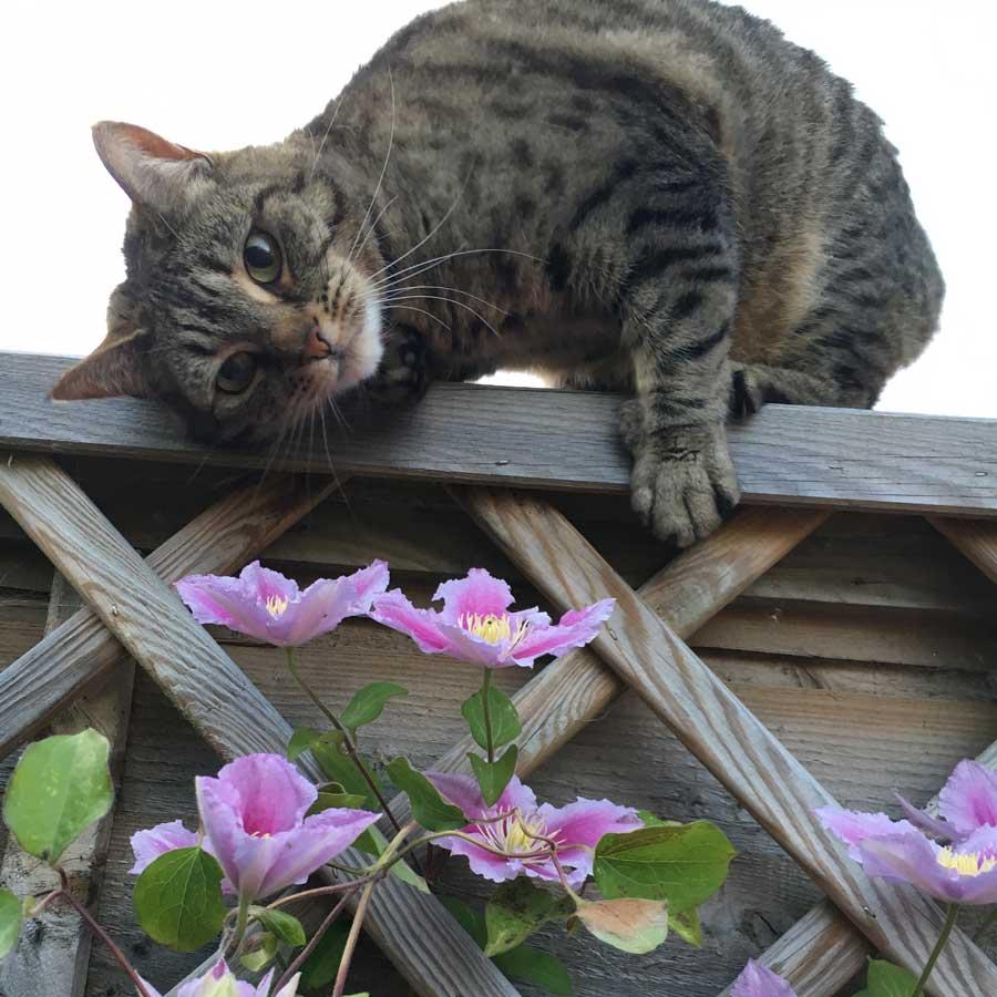 Cat visits