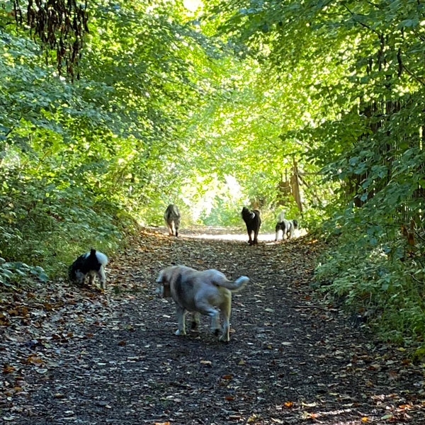 Happy Pets Chichester Dog walking